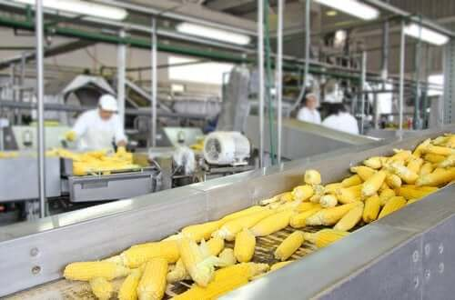 食品の加工方法が栄養価に与える影響