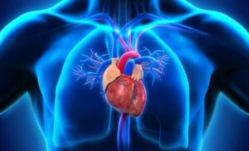心臓:それぞれの構造とその働きについて 心臓の位置