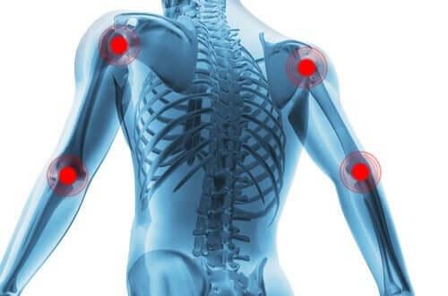 関節の健康を守ろう!滑膜関節とその特徴について 骨格の図解
