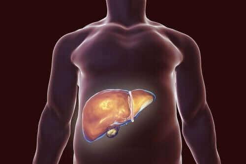 胆嚢に優しい食生活のススメ