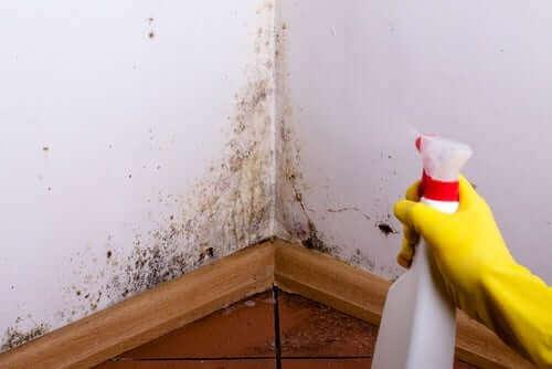 壁のカビ掃除