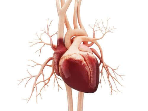 心房粗動の症状と原因について学ぼう