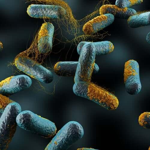 ハチミツと赤ちゃん:危険な組み合わせ 菌の拡大図