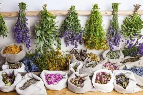 植物療法(フィトセラピー)の利点とは