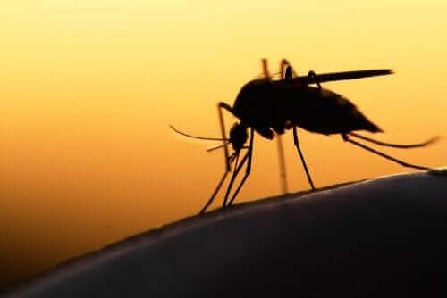 現在使用されている新型コロナウイルス治療法 蚊