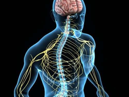 本態性振戦:症状、原因、そして治療法 神経系