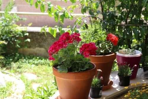 サマーガーデン:夏の庭にぴったりの6つの花