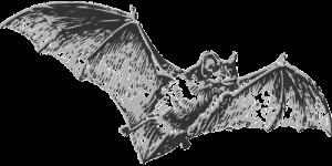 新型コロナウイルスの自然宿主はコウモリ