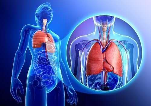呼吸器系 エアロゾル療法って何?