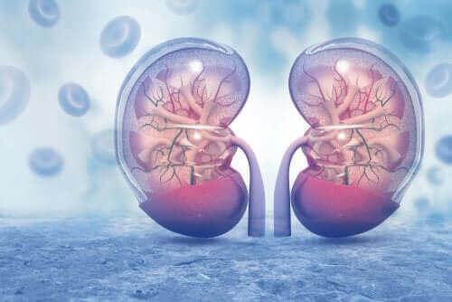 腎臓 アムロジピン:気をつけるべき点と副作用