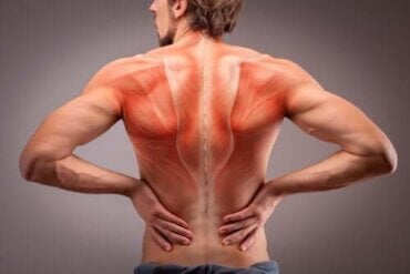 背筋の生体構造を解剖学を通じて詳しく学ぼう!