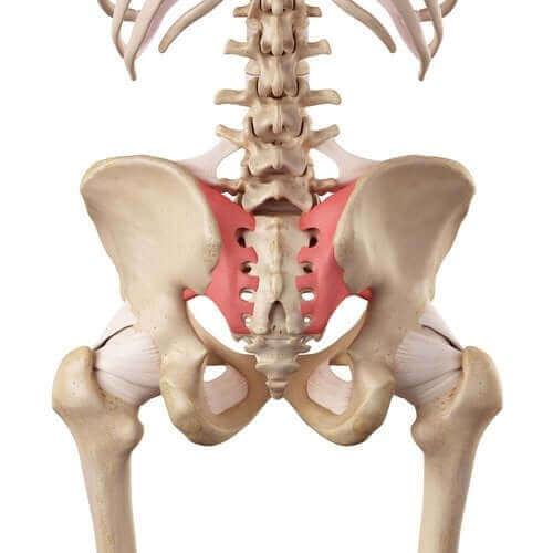 仙腸関節の過度可動性って何?