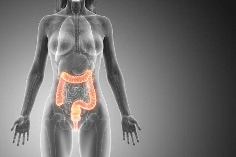女性の体と大腸