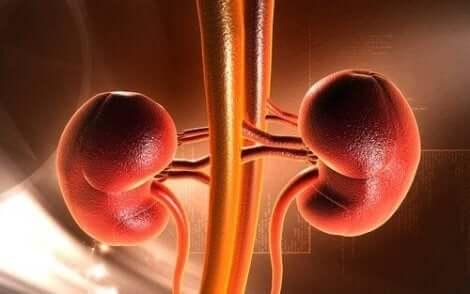 腎臓 セグリルの用途・禁忌・副作用