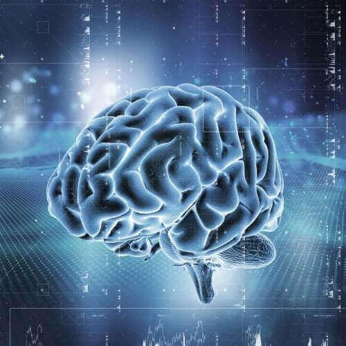 【快楽のシステム:脳内報酬系】どのように機能するのだろう?