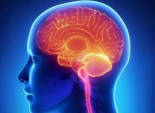 脳内報酬系 快楽