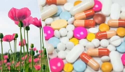 がん性疼痛に対するオピオイド治療 ケシの花