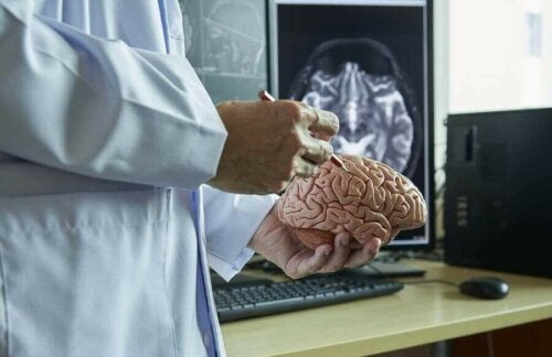 脳の模型 植物状態