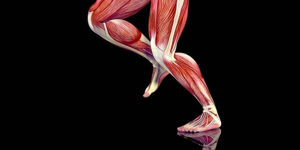 トリガーポイントって何?どう治療するの? 脚の筋肉