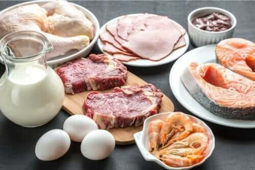 タンパク質の豊富な食品 タンパク質の体内での働き