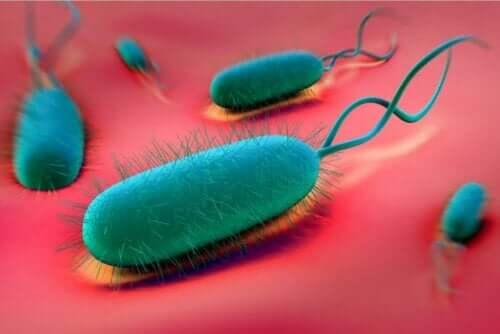 胃潰瘍を予防するのに役立つ方法 ピロリ菌