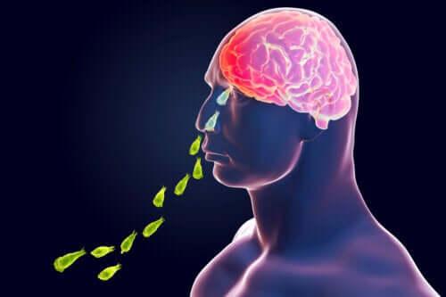 ネグレリア・フォーレリ感染症:脳を食べるアメーバ